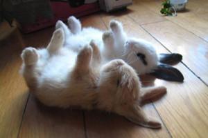 ウサギ (105)