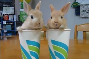ウサギ (9)
