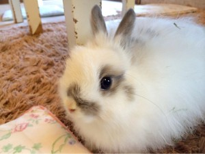 ウサギ (90)