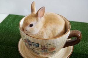 ウサギ (91)