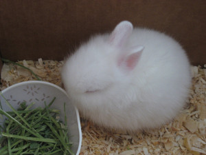 ウサギ (93)