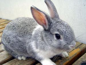 ウサギ (95)