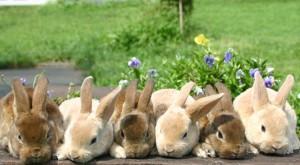 ウサギ (96)