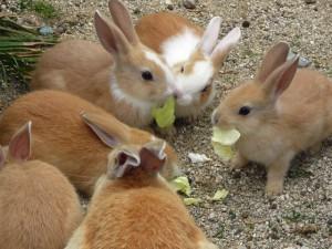 ウサギ (97)