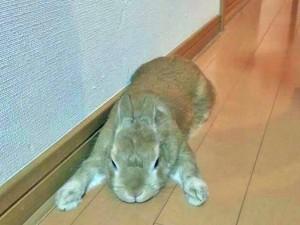 ウサギ (98)