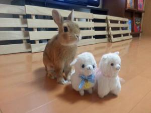 ウサギ (99)