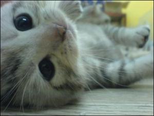癒されるネコ (1)
