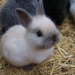 ウサギ (24)